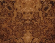 12 Burr Walnut_web